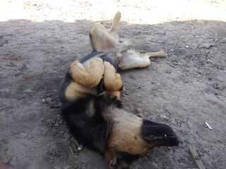 пес балдеет на солнце